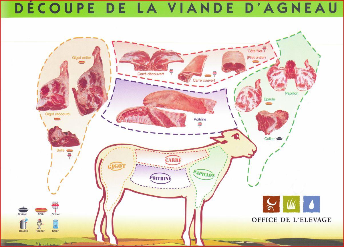 Differents morceaux de l 39 agneau cuisiner l 39 agneau - Cuisiner une selle d agneau ...